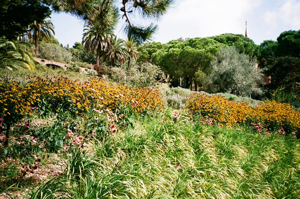 flowers at parc guell
